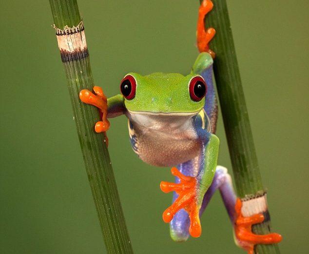 Ildiko's Frog Blog